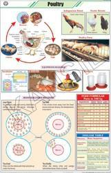 Poultry For General Chart