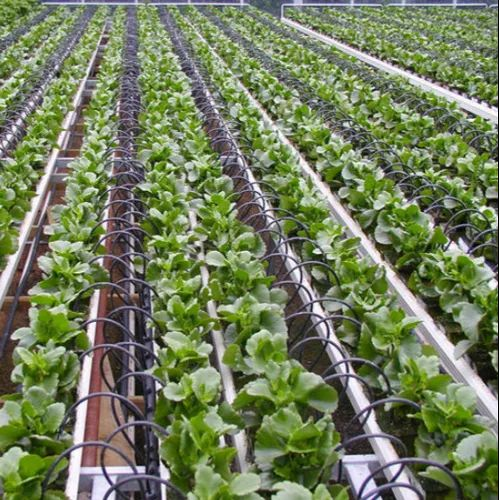Agriculture Drip Tape Drip Irrigation Tube Manufacturer