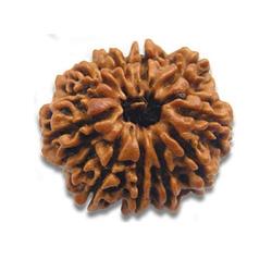 Ten Faced Rudraksha Beads