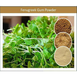 Hydrocolloid Fenugreek Gum Powder