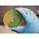 Agar Agar Bacteriological Grade