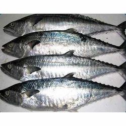 seer fish in chennai tamil nadu seer balamash suppliers