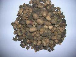 Jamun Seeds