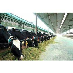 Dairy Farm Consultancy Services