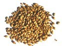 Natural Barley Seeds