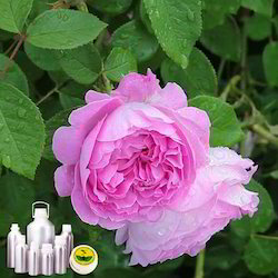 Rose Damask Absolute Oil