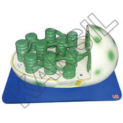 Chloroplast For Histology & Biomolecules Model