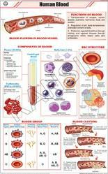 Human Blood  For Zoology Chart