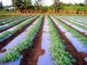 Agricultural Mulching Film