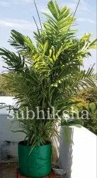 Tree in 340 gsm Subhiksha Grow Bags