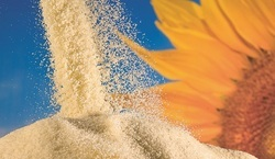 De- Oiled Sunflower Lecithin Powder Food Grade