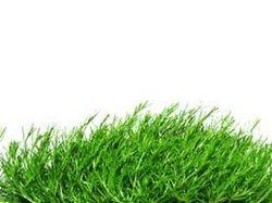 Irish Moss Extract