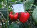 Massilia  Capsicum Seeds