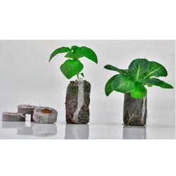 Cocopeat Grow Coins