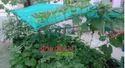 Outdoor Rooftop Farming