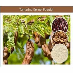 Healthy ISO Certified Tamarind Gum Powder for Best Hair