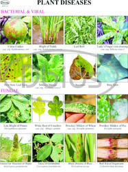 Plant Diseases Charts