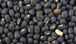 Black Gram Seeds