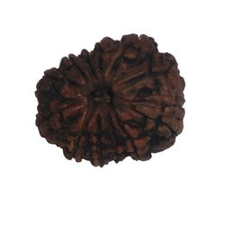Twelve Faced Rudraksha Beads