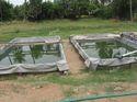Spirulina Cultivation Pondliners