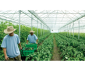Agricultural Industry Recruitment