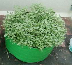"""24"""" X 09"""" Hdpe 200gsm Green Grow Bags"""