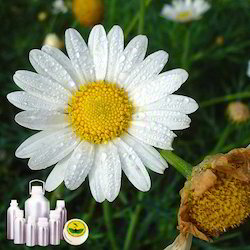 Chamomile Roman Oil Certified Organic