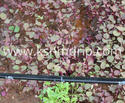 Quality Farm Agriculture Drip Tape