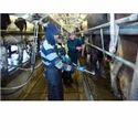 Dairy Farm Recruitment Services