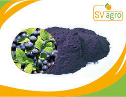 Anthocyanidin 25% Bil Berry Fruit Extract