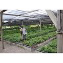 Greenhouse Farming Services