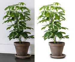 Clipping Path Service UK USA India