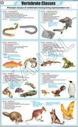 Vertebrate Classes For Zoology Chart