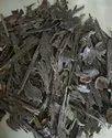 Agarwood Golaghat,SBAW9024