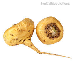 Maca Root Extracts