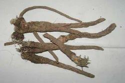 Pellitory Roots / Akarkara