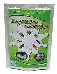 Metarhizium Anisopliae