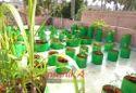 Maadi Thottam Organic Terrace Gardening