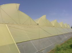 Ginegar 205 N Greenhouse Covering Film