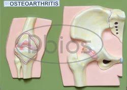 Orthopaedic Model