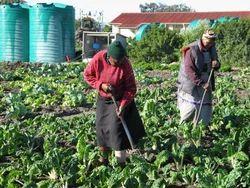 Horticulture Farm Development Service