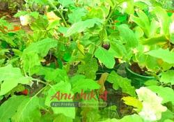 Organic Kitchen Garden Grow Bag