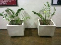 Fibre Planters