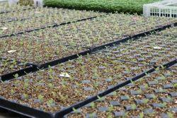 Vermiculite Horticulture & Agriculture Grade