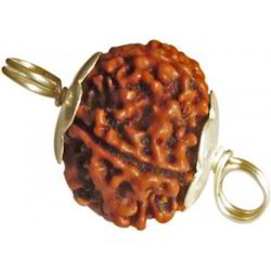 Five Faced Rudraksha