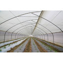 Ginegar Sunsaver IR 504(C-779) Greenhouse Covering Film