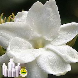 Jasminum Sambac Absolute Oil