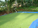Azolla Cultivation Pondliners