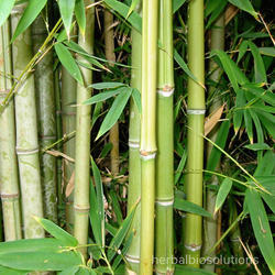 Bamboo Extracts