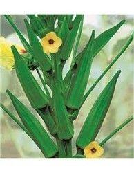 Okra - Amar Tulsi (Hybrid) (Vegetable Seed)